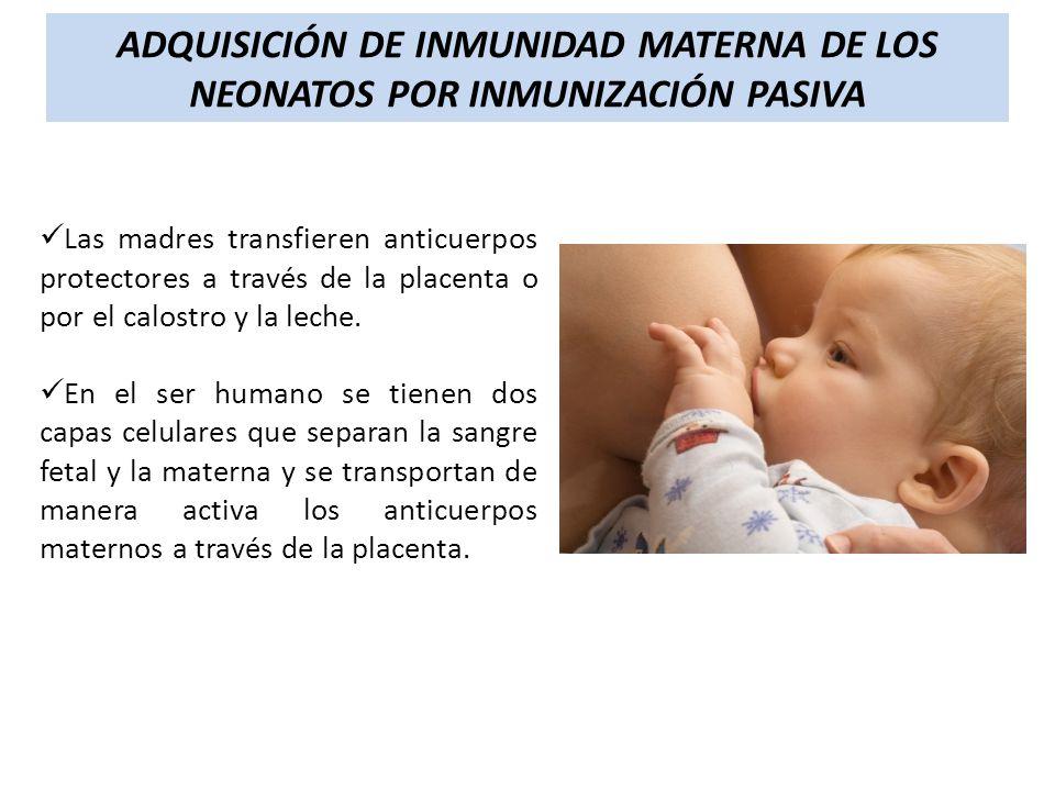 ADQUISICIÓN DE INMUNIDAD MATERNA DE LOS NEONATOS POR INMUNIZACIÓN PASIVA