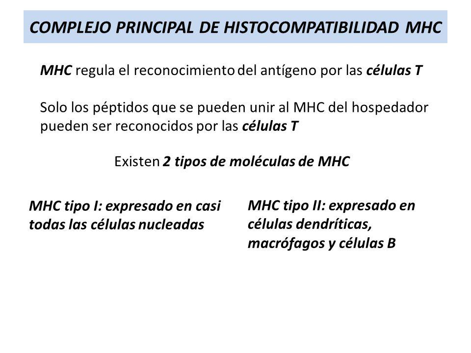 COMPLEJO PRINCIPAL DE HISTOCOMPATIBILIDAD MHC