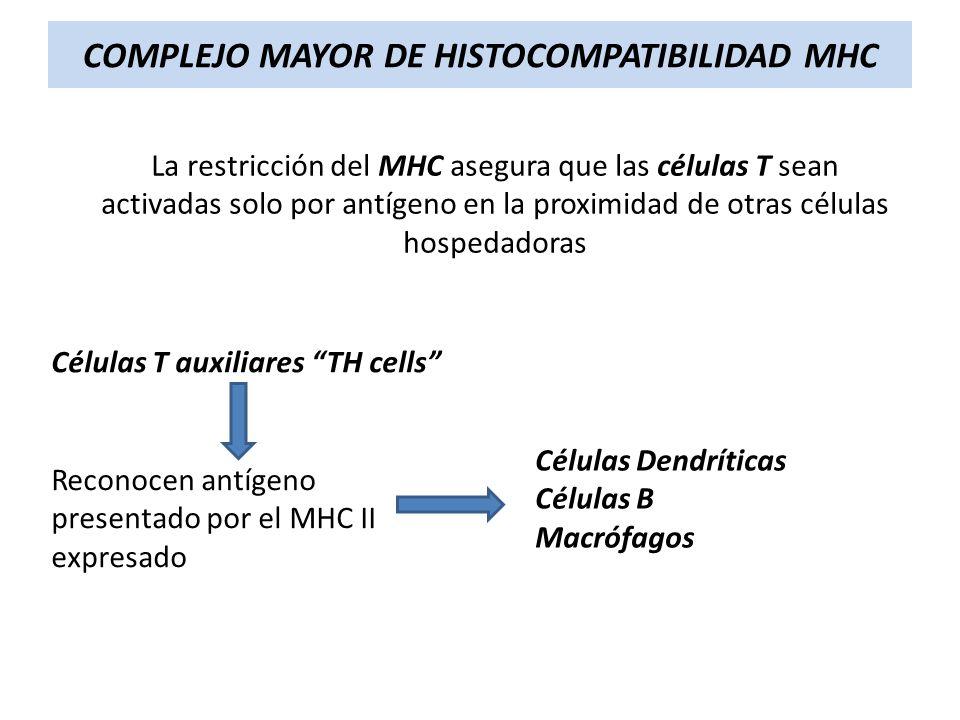 COMPLEJO MAYOR DE HISTOCOMPATIBILIDAD MHC