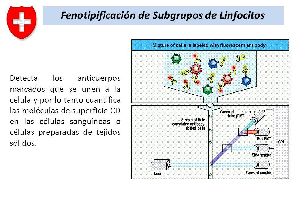 Fenotipificación de Subgrupos de Linfocitos