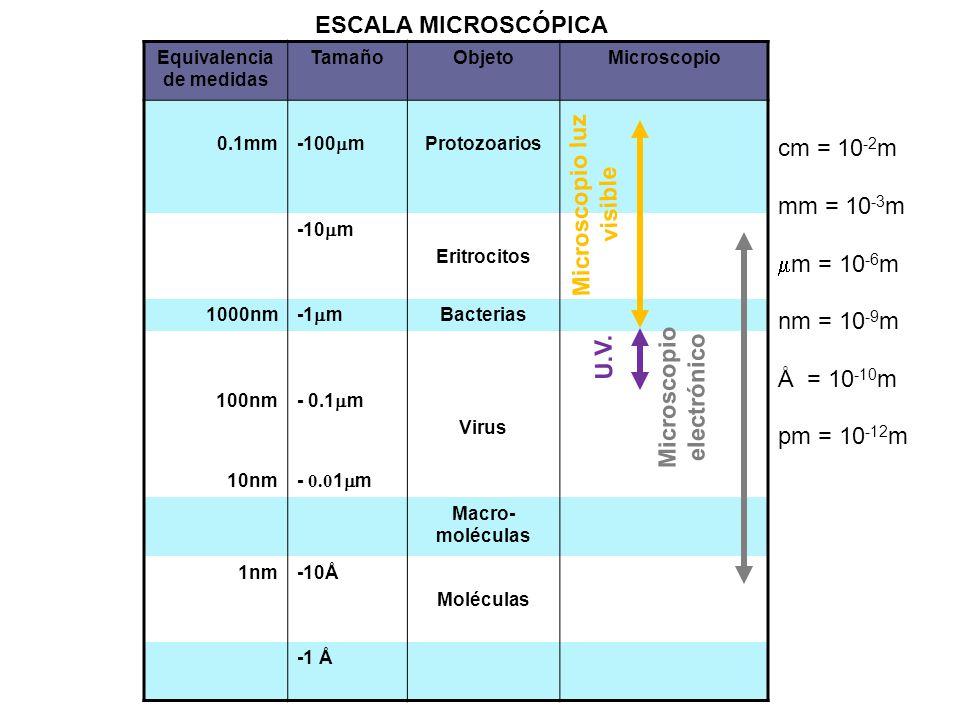 Microscopio luz visible U.V. Microscopio electrónico