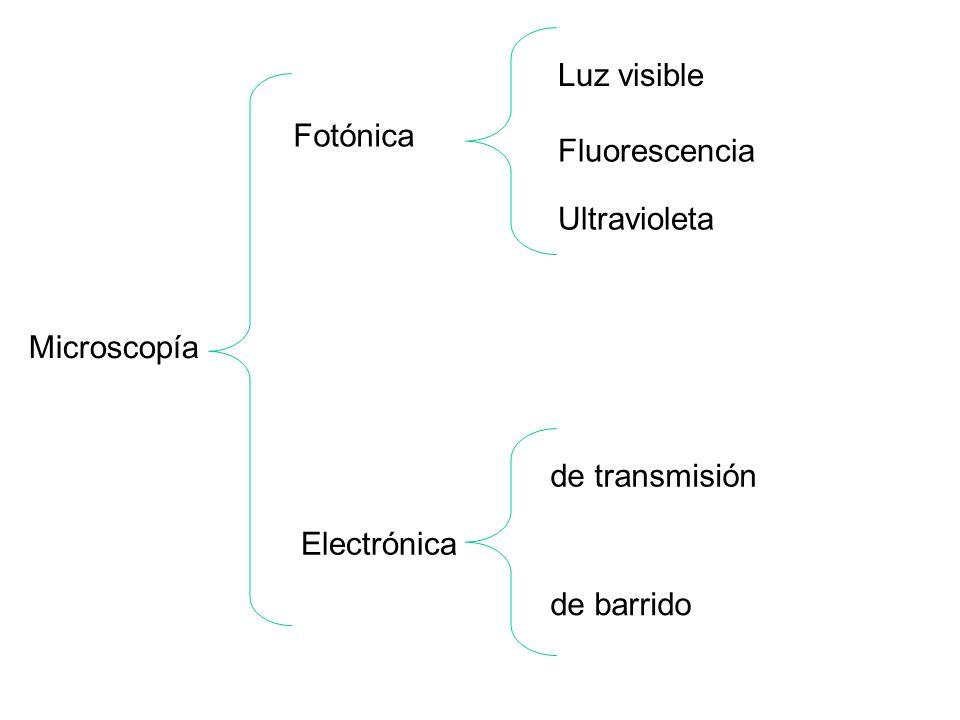 Luz visible Fotónica Fluorescencia Ultravioleta Microscopía de transmisión Electrónica de barrido