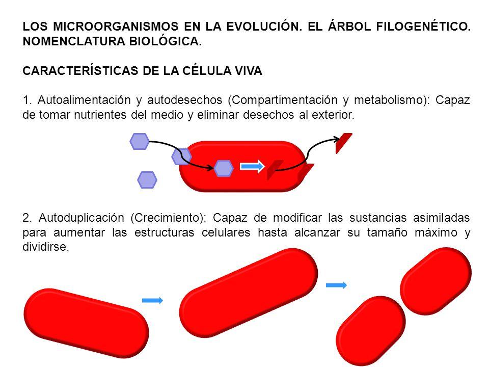 LOS MICROORGANISMOS EN LA EVOLUCIÓN. EL ÁRBOL FILOGENÉTICO