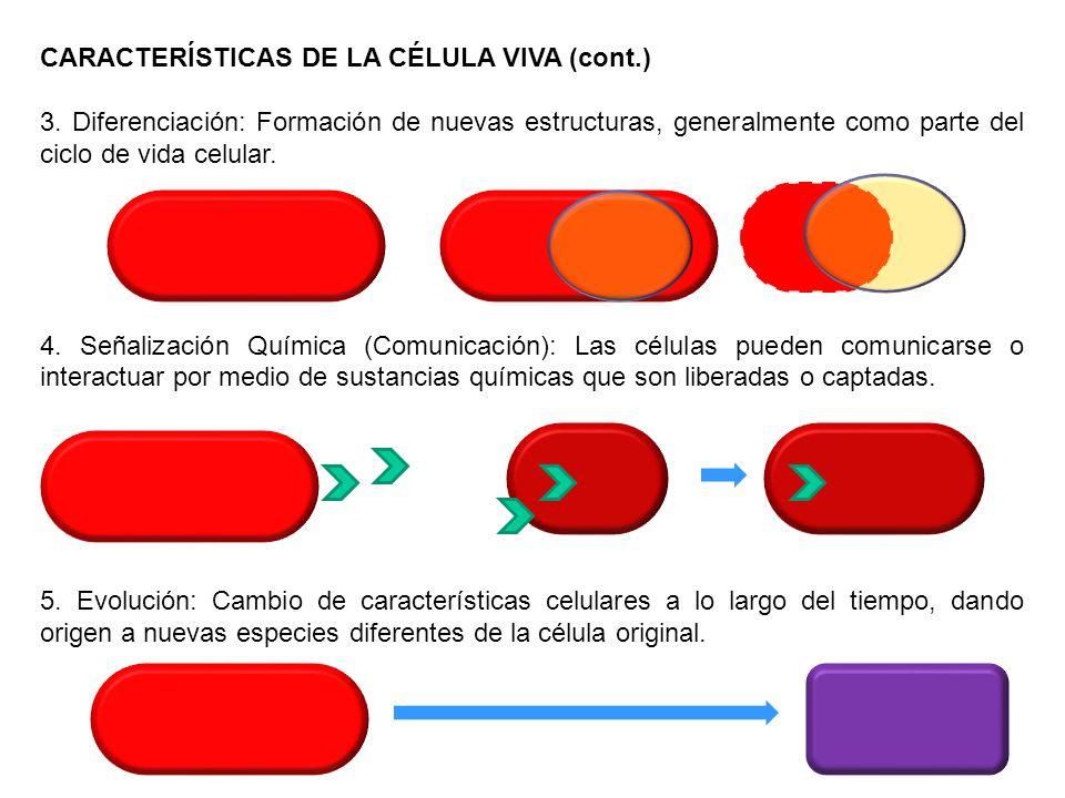 CARACTERÍSTICAS DE LA CÉLULA VIVA (cont.)