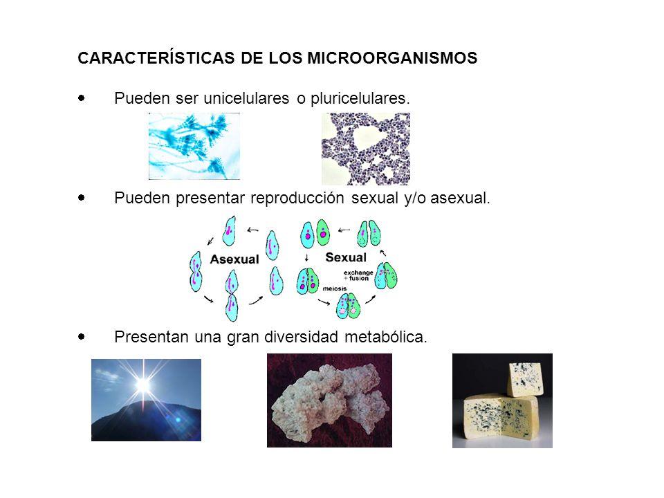 CARACTERÍSTICAS DE LOS MICROORGANISMOS