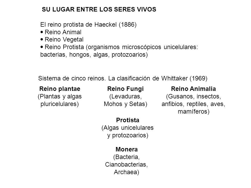 Reino Animalia Protista Monera