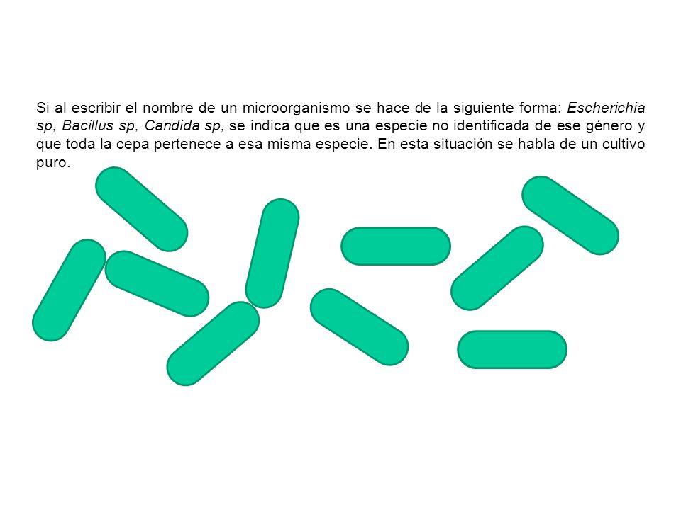 Si al escribir el nombre de un microorganismo se hace de la siguiente forma: Escherichia sp, Bacillus sp, Candida sp, se indica que es una especie no identificada de ese género y que toda la cepa pertenece a esa misma especie.