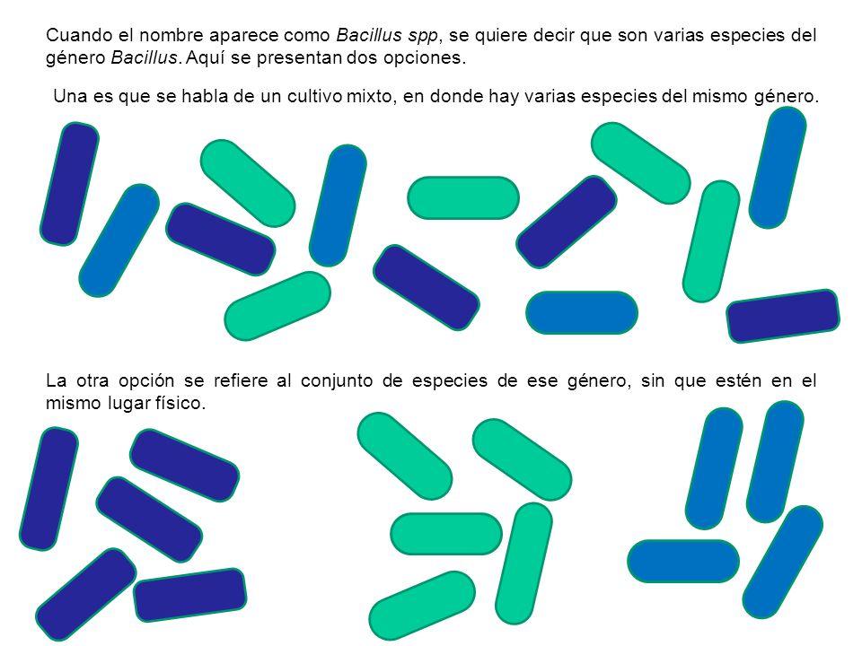 Cuando el nombre aparece como Bacillus spp, se quiere decir que son varias especies del género Bacillus. Aquí se presentan dos opciones.