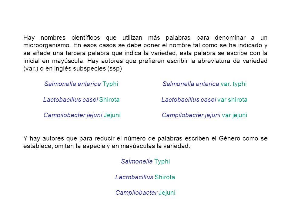 Salmonella enterica Typhi Salmonella enterica var. typhi