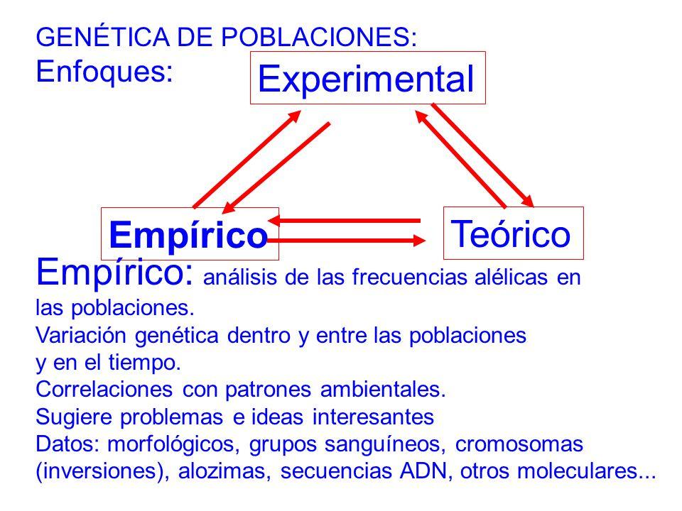 Empírico: análisis de las frecuencias alélicas en