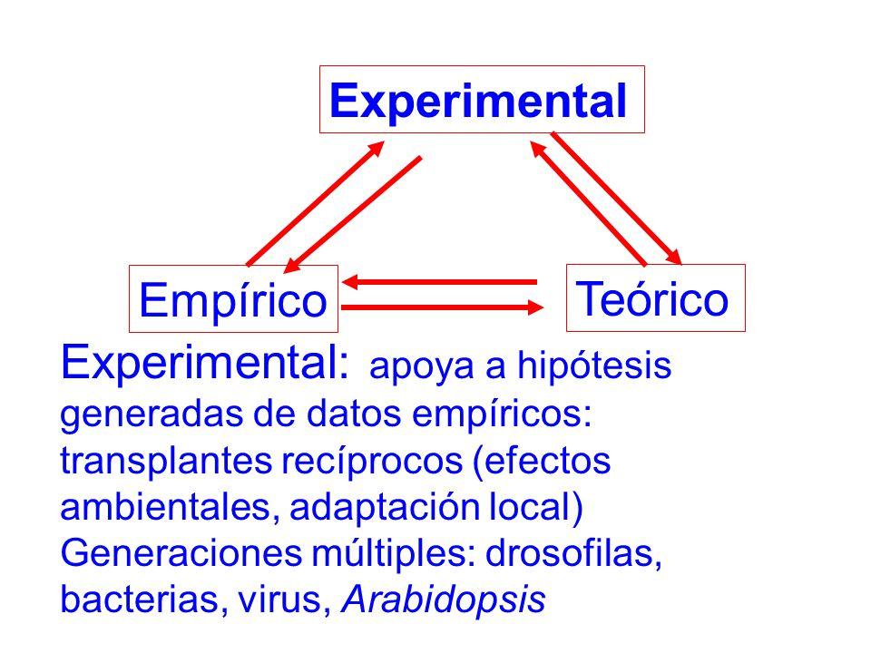Experimental: apoya a hipótesis generadas de datos empíricos: