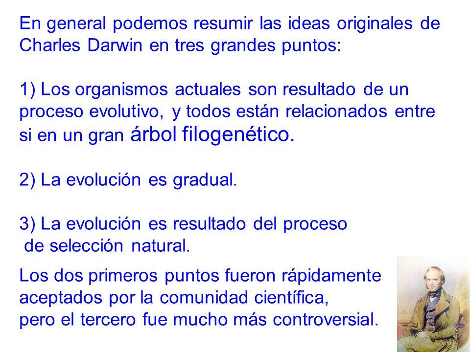 En general podemos resumir las ideas originales de Charles Darwin en tres grandes puntos:
