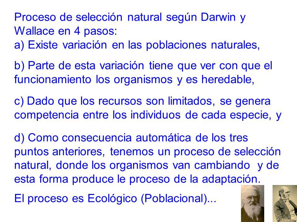 Proceso de selección natural según Darwin y Wallace en 4 pasos: