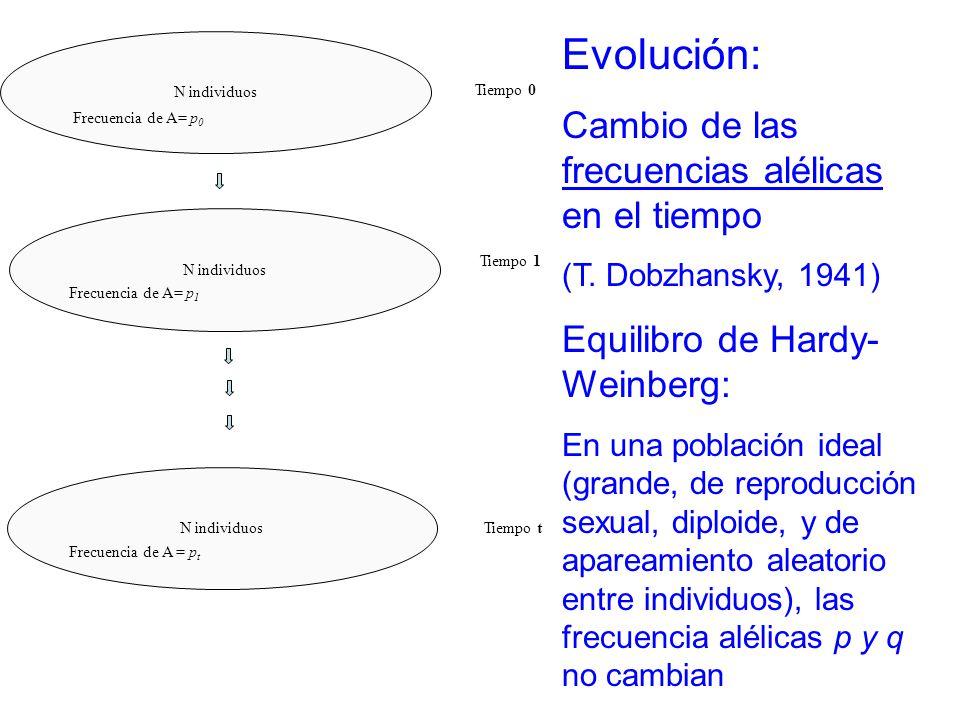 Evolución: Cambio de las frecuencias alélicas en el tiempo