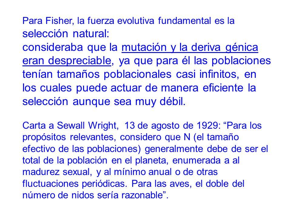 Para Fisher, la fuerza evolutiva fundamental es la selección natural: