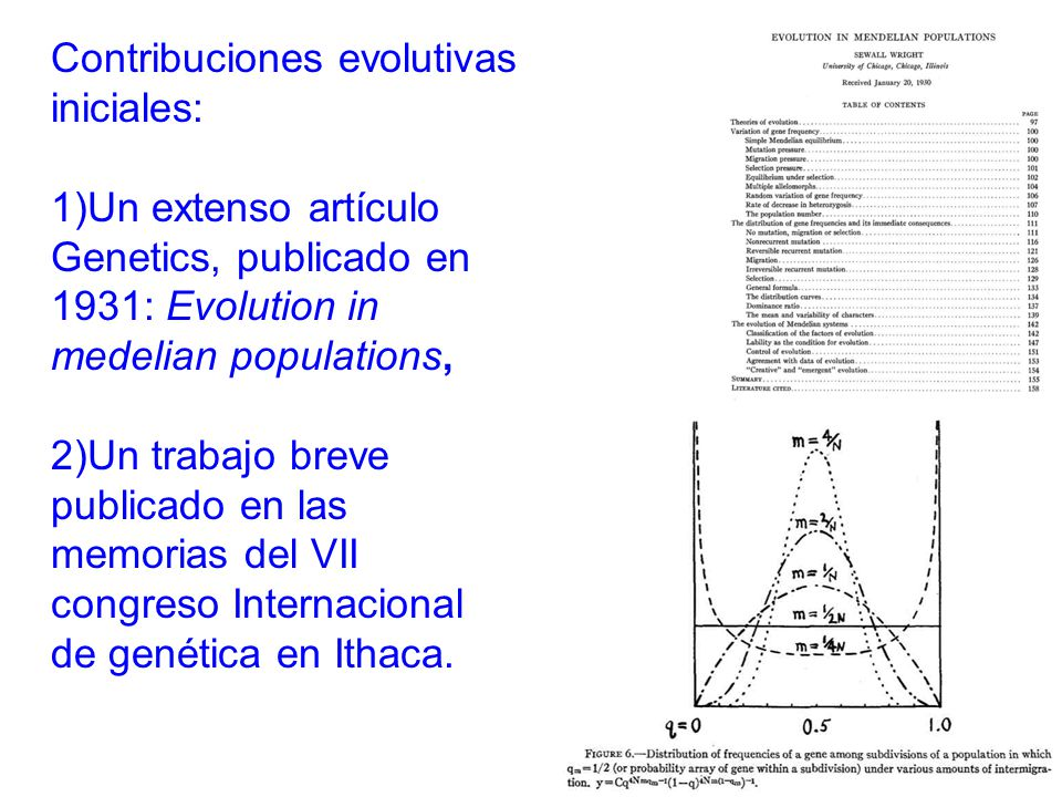 Contribuciones evolutivas iniciales: