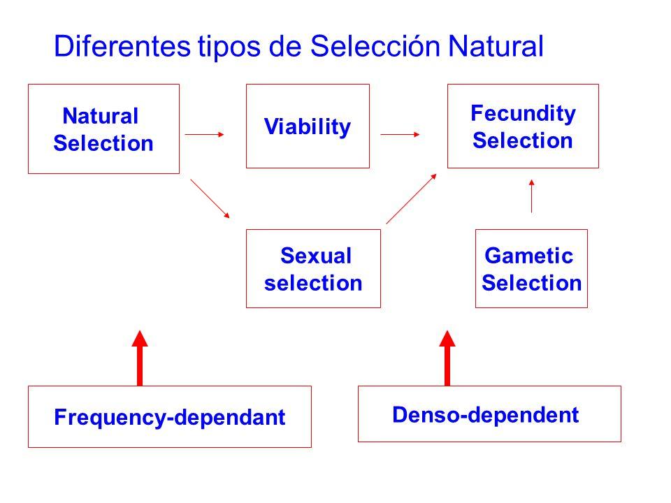 Diferentes tipos de Selección Natural