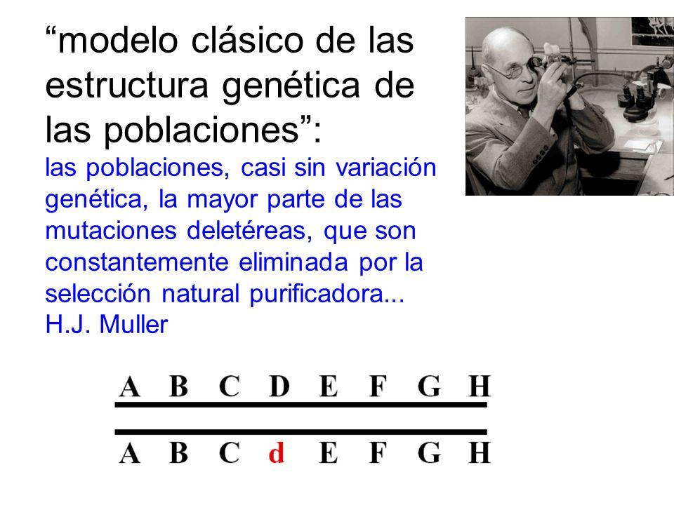 modelo clásico de las estructura genética de las poblaciones :
