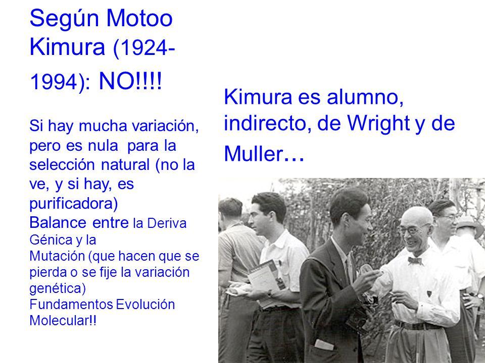 Según Motoo Kimura (1924-1994): NO!!!!