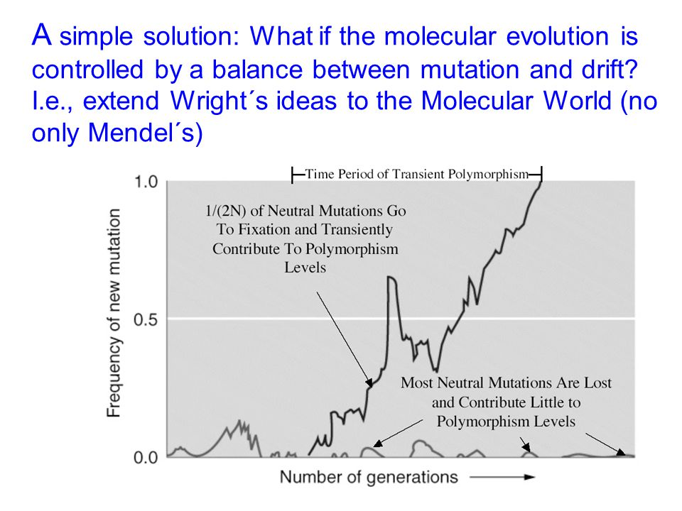 A simple solution: What if the molecular evolution is controlled by a balance between mutation and drift