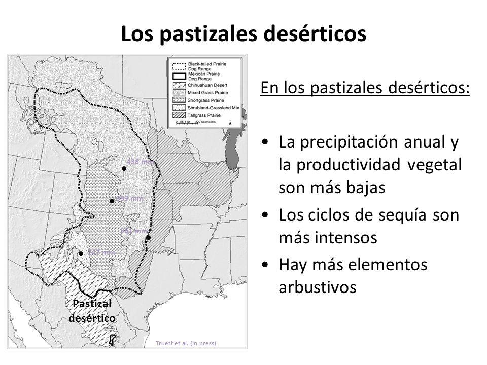 Los pastizales desérticos