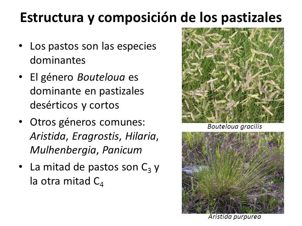 Estructura y composición de los pastizales