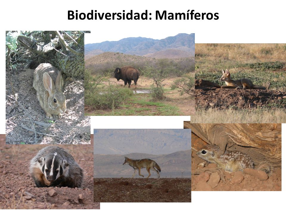 Biodiversidad: Mamíferos