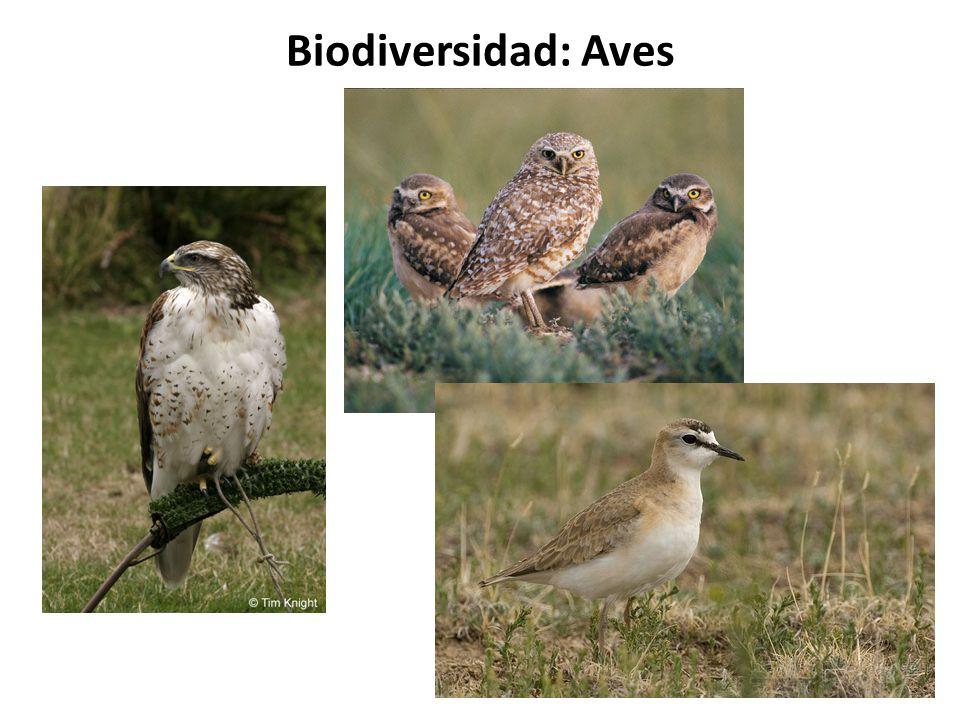 Biodiversidad: Aves
