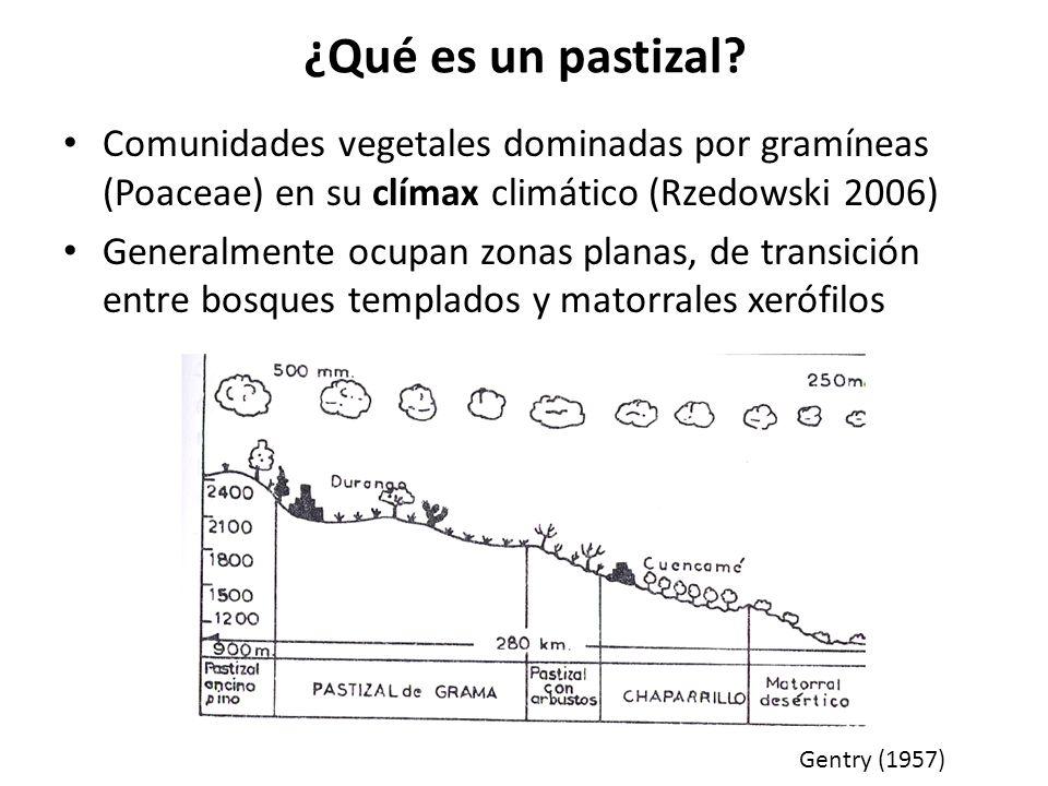 ¿Qué es un pastizal Comunidades vegetales dominadas por gramíneas (Poaceae) en su clímax climático (Rzedowski 2006)