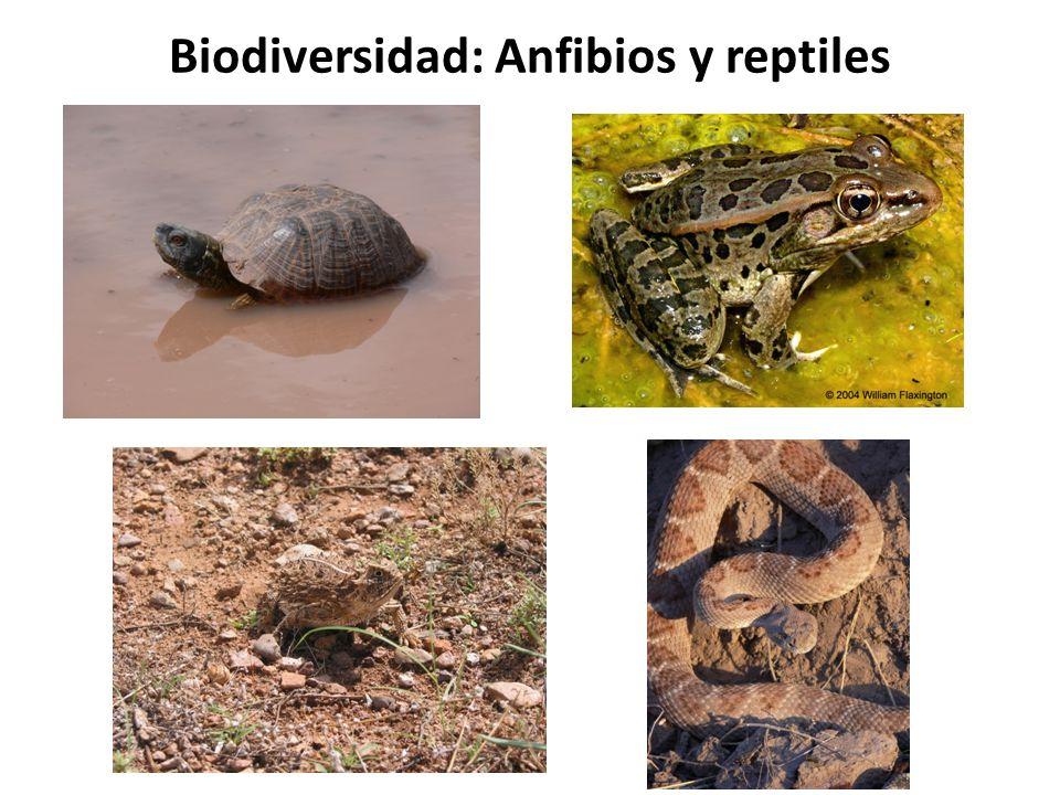 Biodiversidad: Anfibios y reptiles