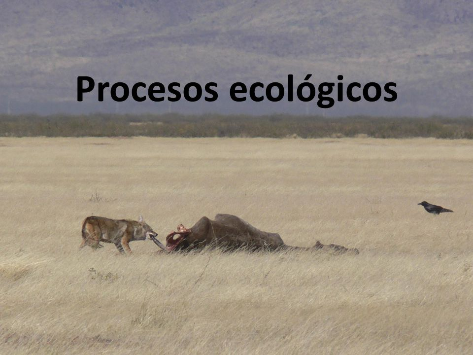 Procesos ecológicos