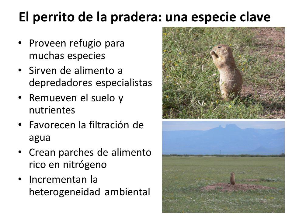 El perrito de la pradera: una especie clave