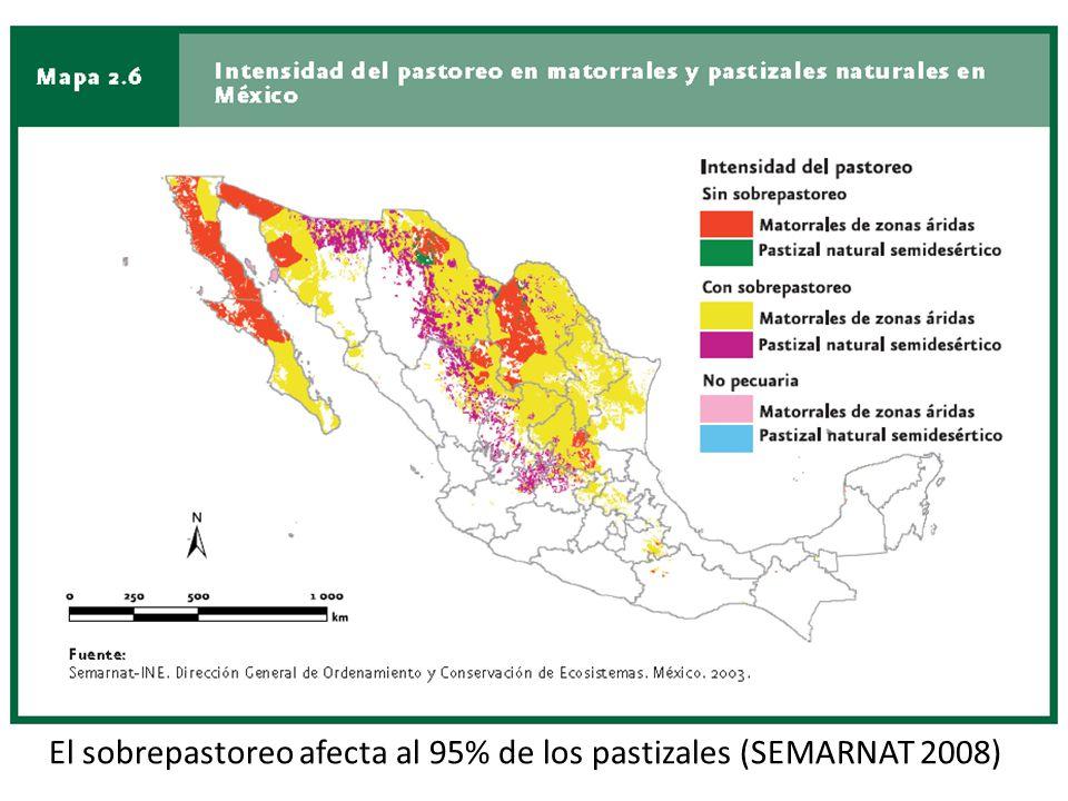 El sobrepastoreo afecta al 95% de los pastizales (SEMARNAT 2008)