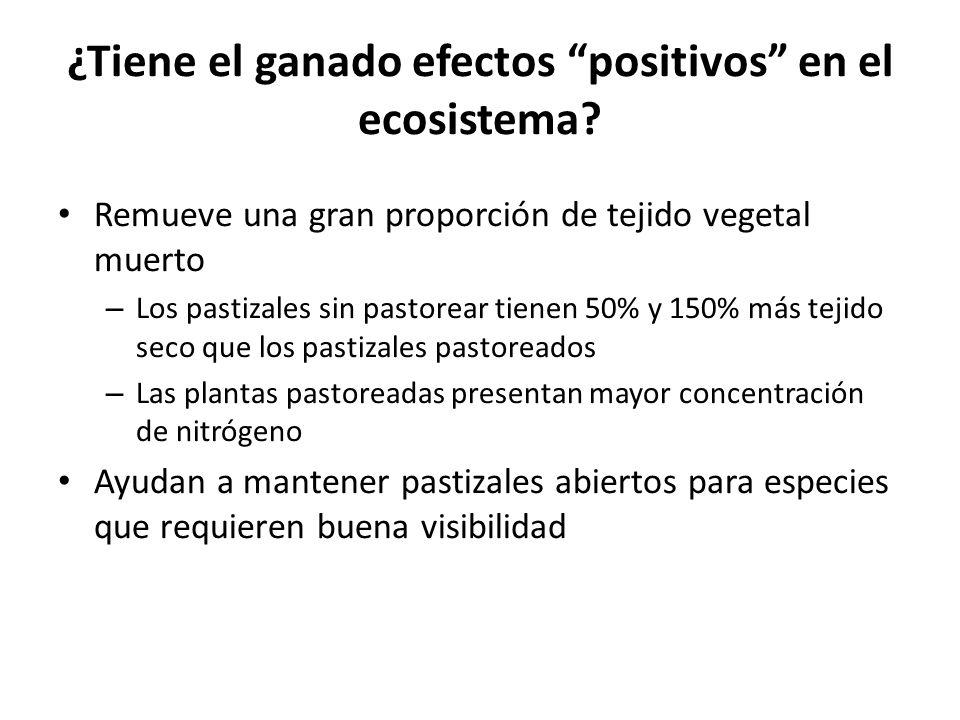 ¿Tiene el ganado efectos positivos en el ecosistema