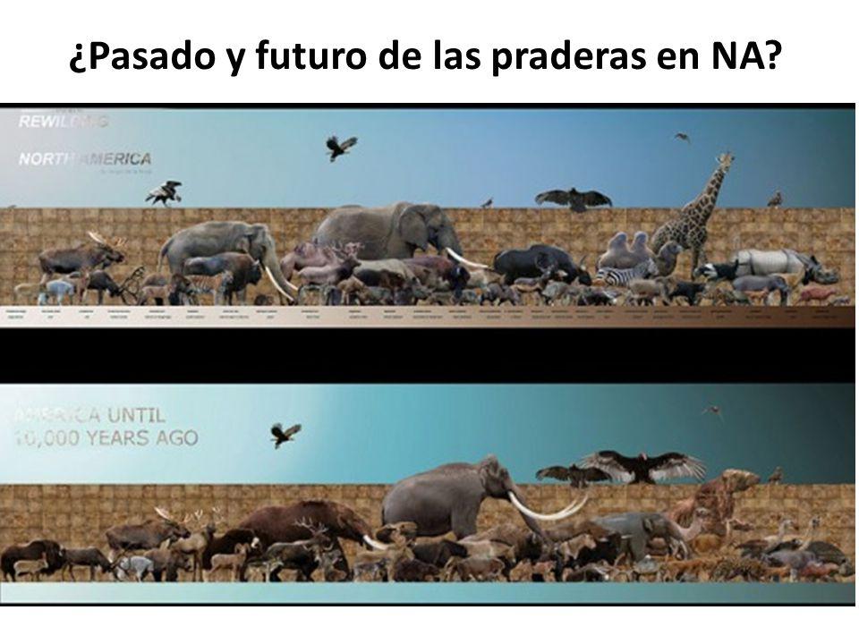 ¿Pasado y futuro de las praderas en NA