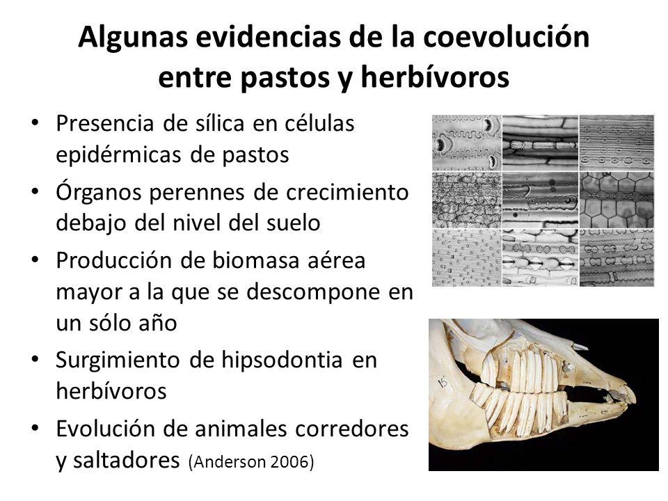 Algunas evidencias de la coevolución entre pastos y herbívoros
