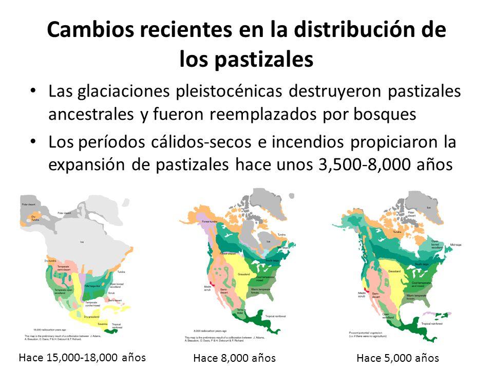 Cambios recientes en la distribución de los pastizales