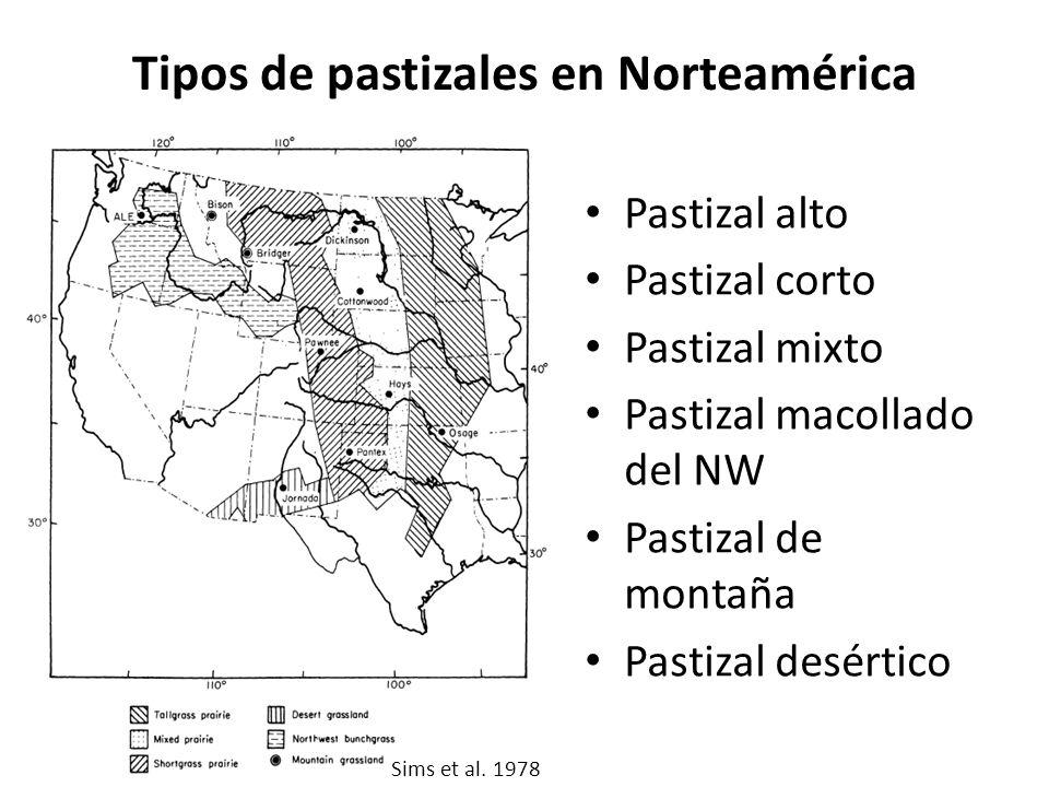 Tipos de pastizales en Norteamérica