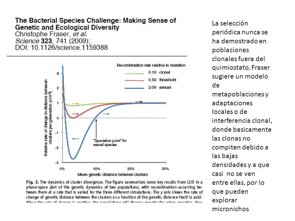 La selección periódica nunca se ha demostrado en poblaciones clonales fuera del quimiostato, Fraser sugiere un modelo de metapoblaciones y adaptaciones locales o de interferencia clonal, donde basicamente las clonas no compiten debido a las bajas densidades y a que casi no se ven entre ellas, por lo que pueden explorar micronichos