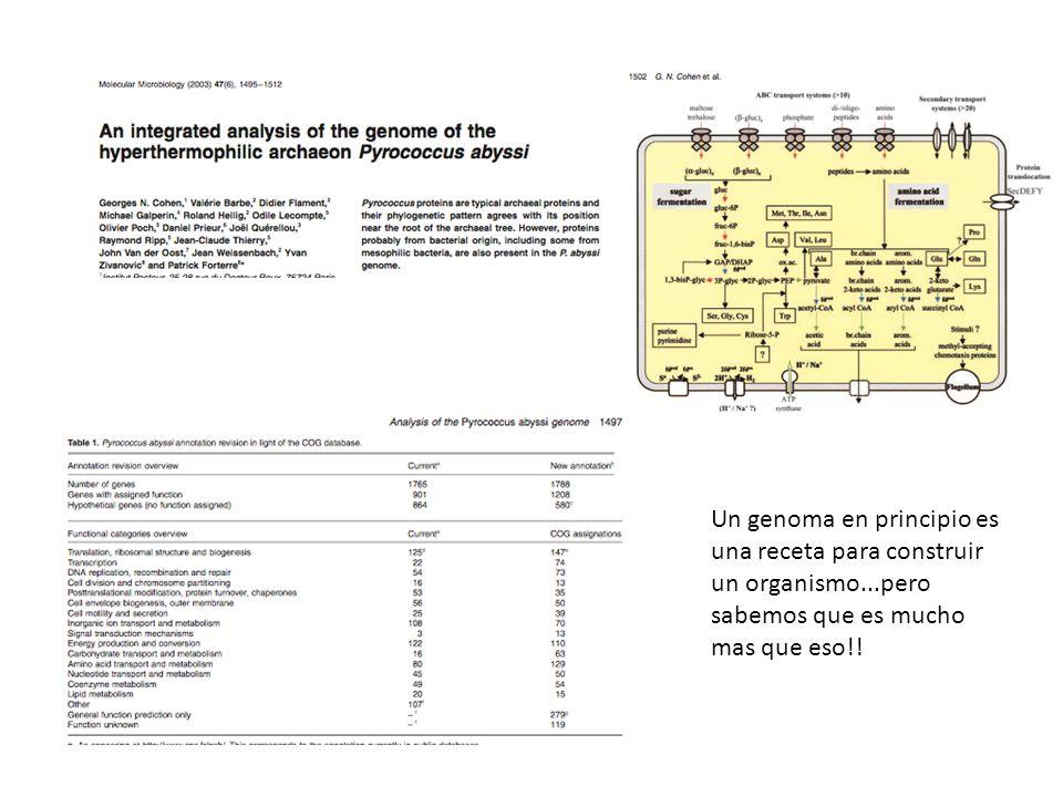Un genoma en principio es una receta para construir un organismo