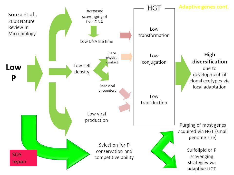 Low P HGT Adaptive genes cont.