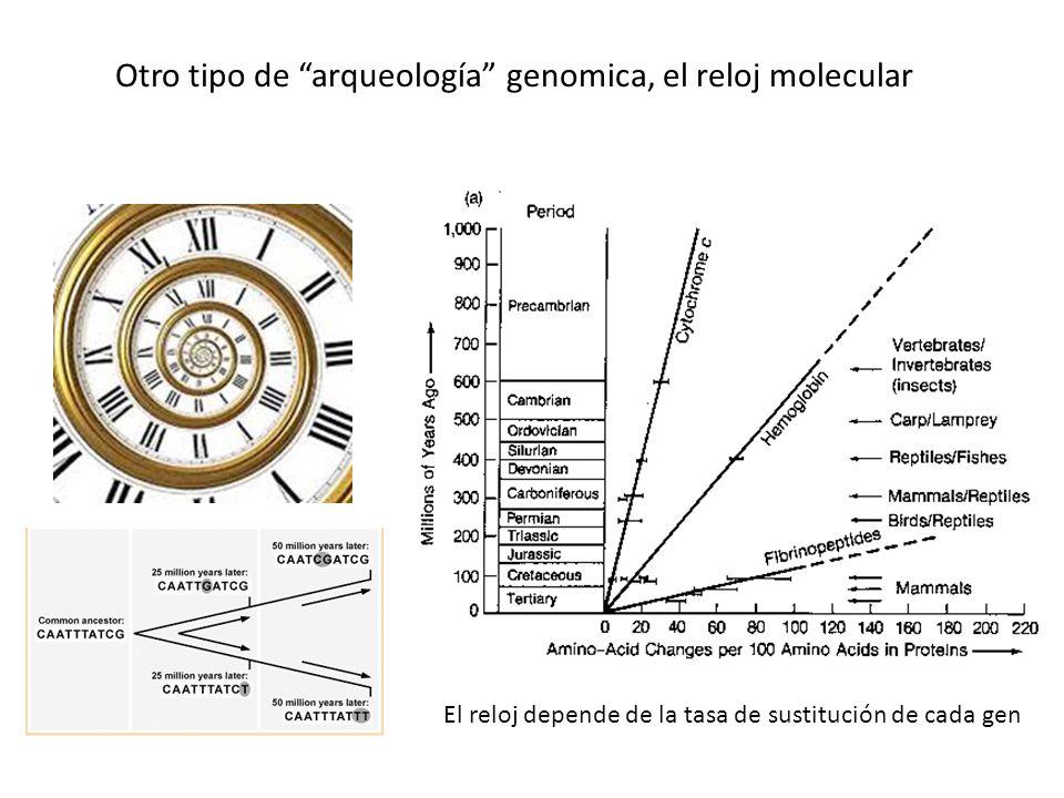 Otro tipo de arqueología genomica, el reloj molecular