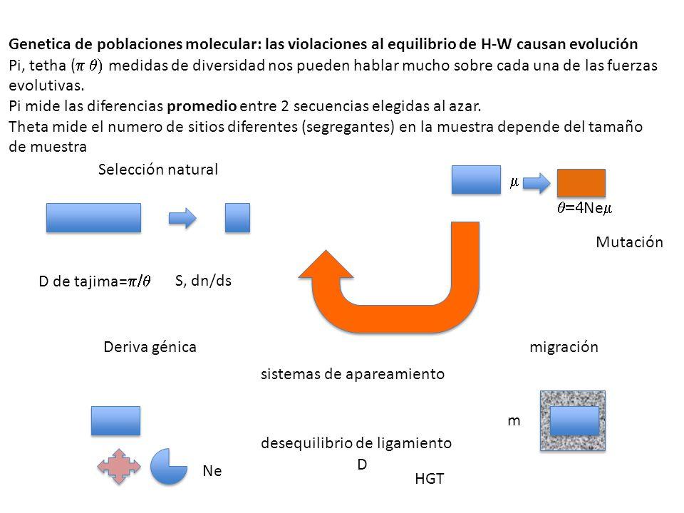 Genetica de poblaciones molecular: las violaciones al equilibrio de H-W causan evolución