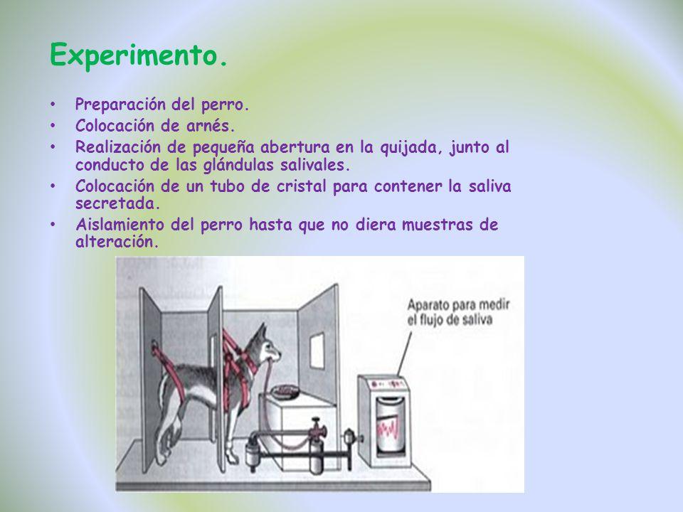 Experimento. Preparación del perro. Colocación de arnés.