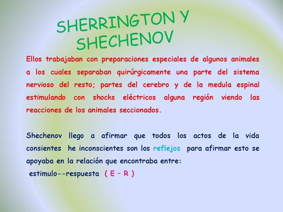 SHERRINGTON Y SHECHENOV