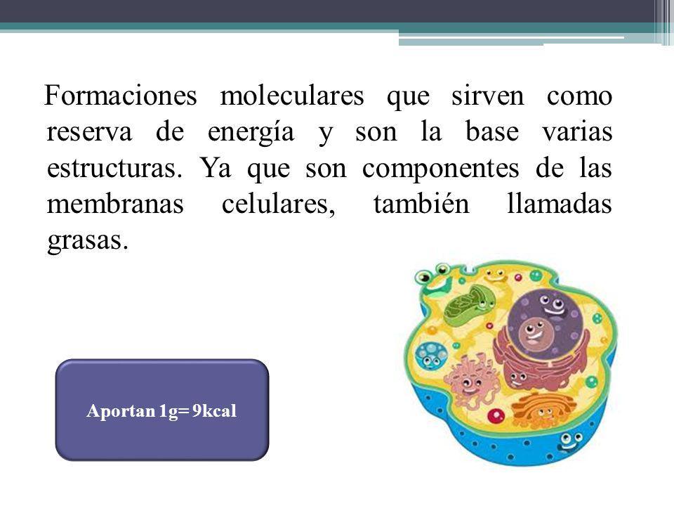 Formaciones moleculares que sirven como reserva de energía y son la base varias estructuras. Ya que son componentes de las membranas celulares, también llamadas grasas.