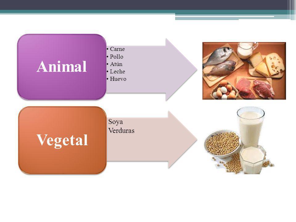 Animal Carne Pollo Atún Leche Huevo Vegetal Soya Verduras