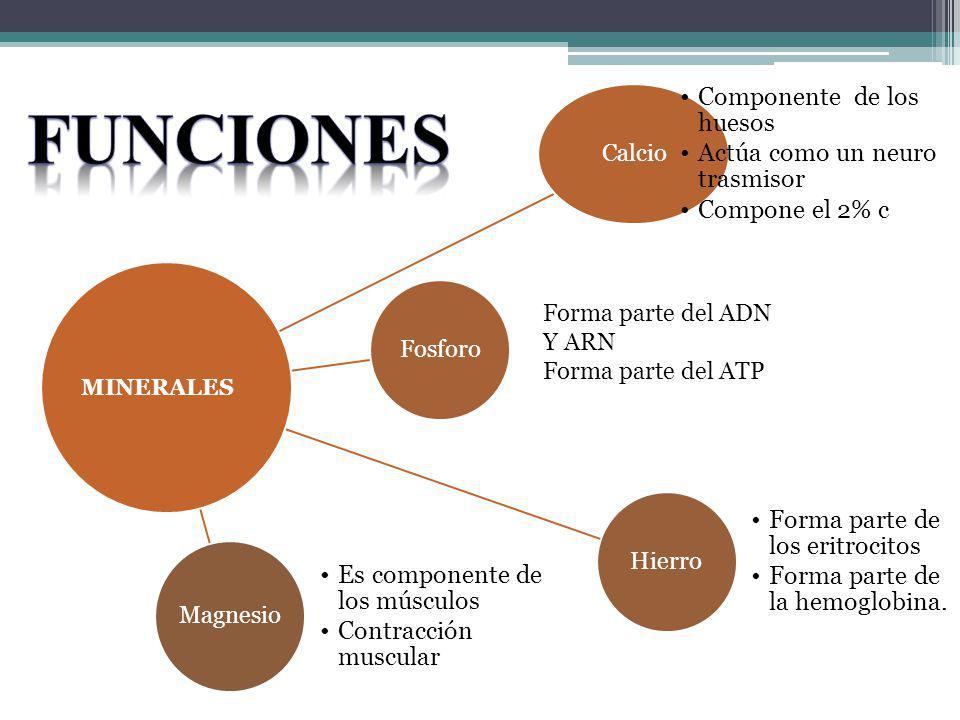 Funciones Forma parte del ADN Y ARN Forma parte del ATP MINERALES
