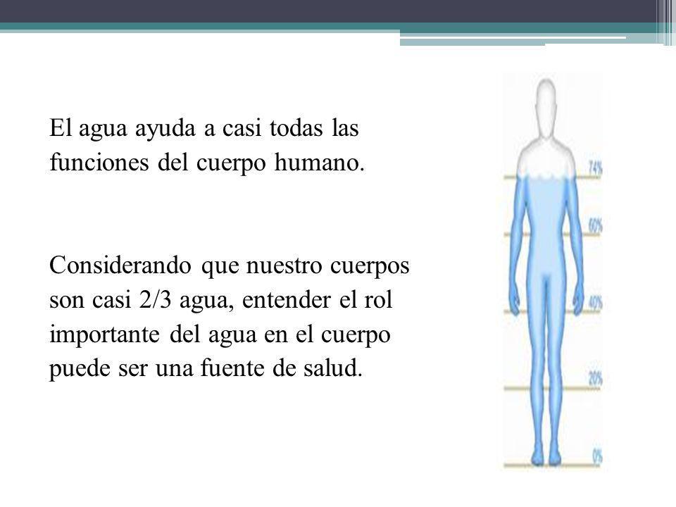 El agua ayuda a casi todas las funciones del cuerpo humano