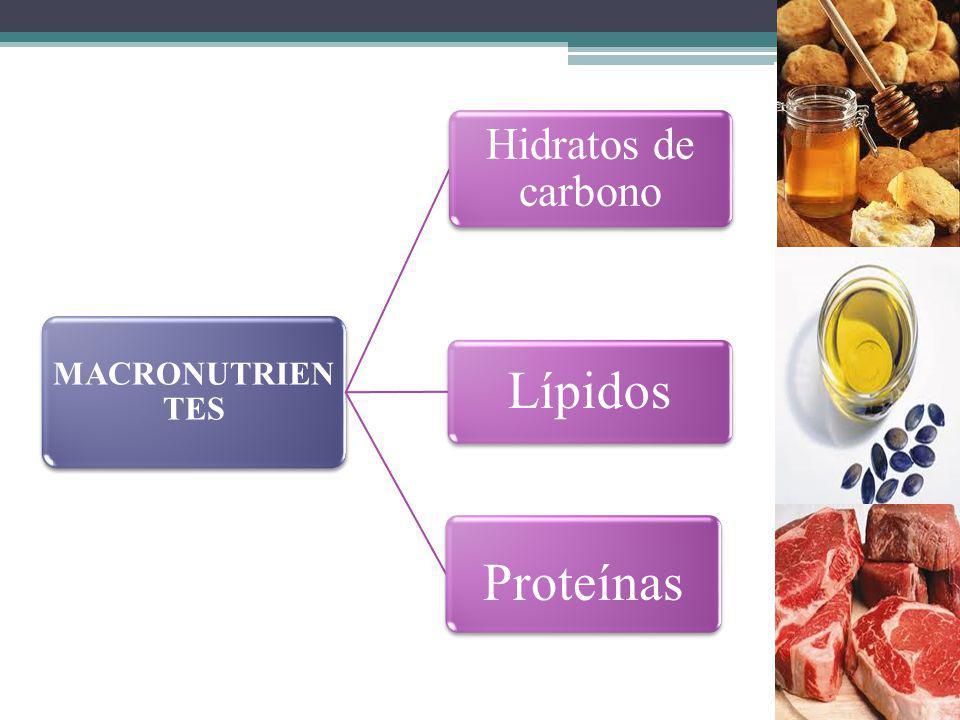 MACRONUTRIENTES Hidratos de carbono Lípidos Proteínas